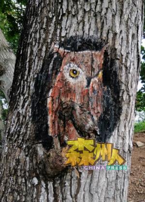藏在树干中的猫头鹰。