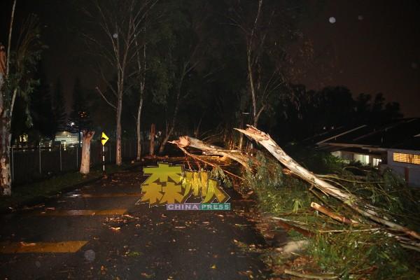 """芙蓉近年不时会刮起怪风,投保人的住宅火险与车险有无承保风灾构成的毁损,一定要向保险代理谘询相关事宜,确保灾害时""""万无一失""""。"""