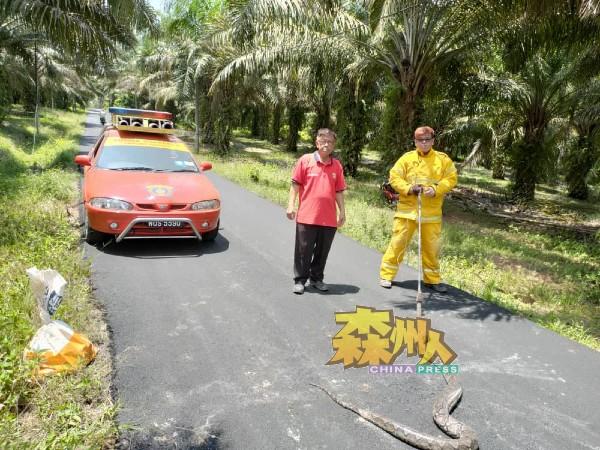 潘宥磬(左)接获斯汀消拯局的联系后,前往现场捕获两条蟒蛇。