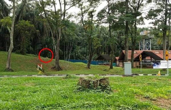 """大道休息站有""""老虎""""守着,如厕会有压力吗?(照片取自Negeri Sembilan Kini)"""